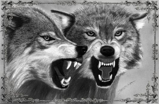 Realistic Drawings Of Wolves Growling JasminaSusak | Deviant...