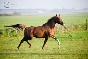 Trot by Colourize