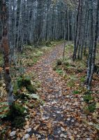 fall path by LucieG-Stock