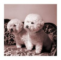 Dogs by xuvi