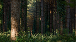 Deep Forest Light Wallpaper 4 : The Alley by Pierre-Lagarde