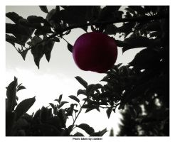Apple by ciasther