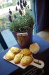 Homemade Madeleines with Clotted Cream by RobindV