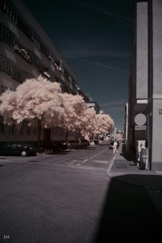 Infrared Impressions 2 by lodol