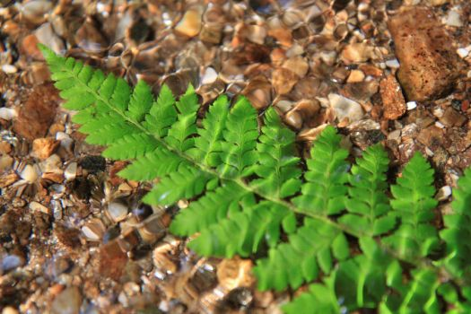 Fern in water by Mark-Heather
