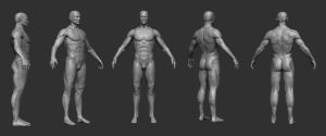 male anatomy study by opengraphics