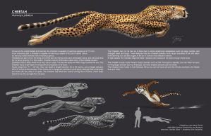 Cheetah Comp by EtherealProject