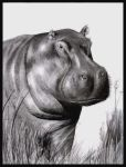 Old Hippo Drawing by AndyFairhurst