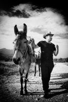 mule driver, mule and fly by BobRock99