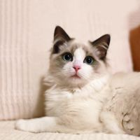Cat by Froststorm1314