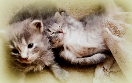 Les Chatons by xXmelodicRoseXx