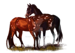 |Comissions two horses| Sox and Levi by MUSONART