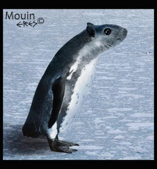 The mouin by Eres-Graph