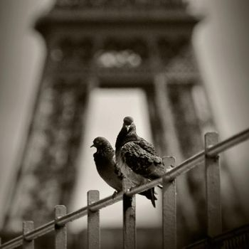 two doves and eiffel tower by anjelicek
