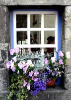 Flowers on the Windowsill. by Julie-xxx