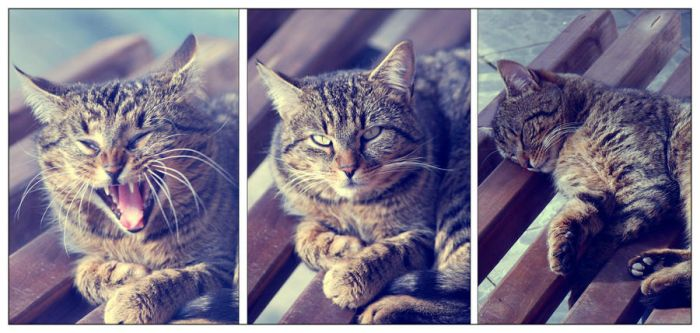Meow (: by SolcEvca