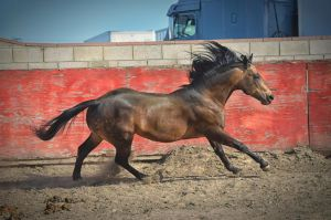 DWP FREE HORSE STOCK 59 by DancesWithPonies
