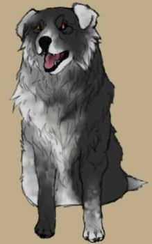 Dog Study #10- Whirlpool by TheWolfLover2003