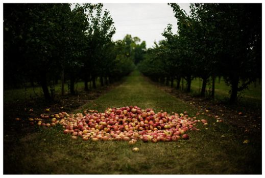 apples. by fxcreatography