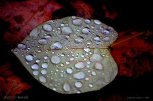 Autumn Jewels by adeb1113