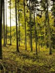 Forest by FrantisekSpurny