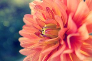 A Sun flower by Ootani-Photography