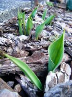 Spring Is On It's Way by Seattle-Storm