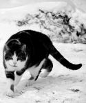 Fat Cat  II by suicidalsocialite