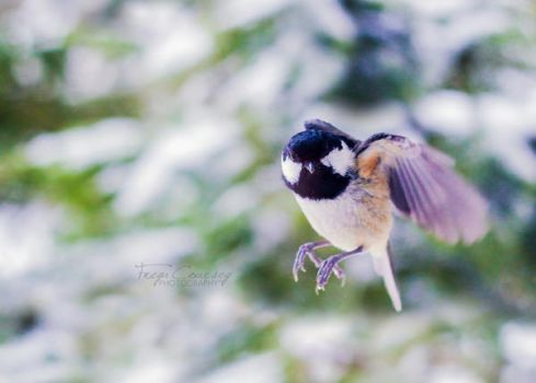 Hover by FreyaPhotos
