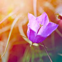 Stand alone by EliseEnchanted