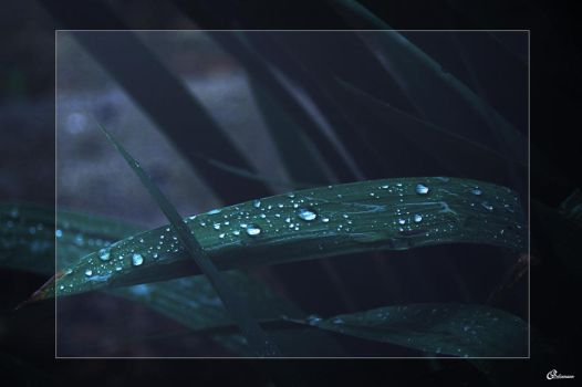 rainy drop by MysticAstral