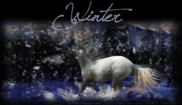 WINTER by OneOctoberStorm