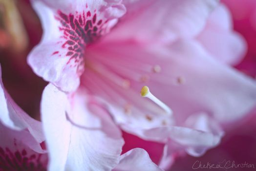 Inflorescence 4 by MordsithCara