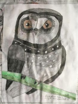 The great sooty owl by wendybird96