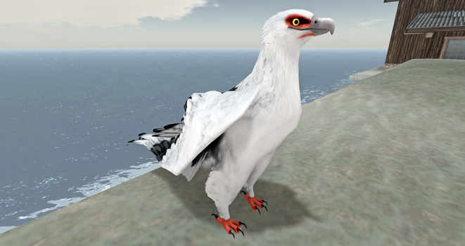 Palm-nut Vulture Avatar! by Zzri