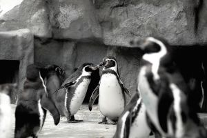 penguins by stupidduck