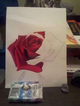 Colored Pencil Rose - Two by Crafted-DreamScapes