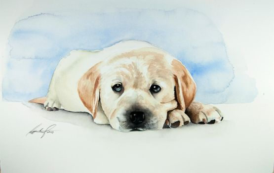 Yellow lab puppy by wycoffsart