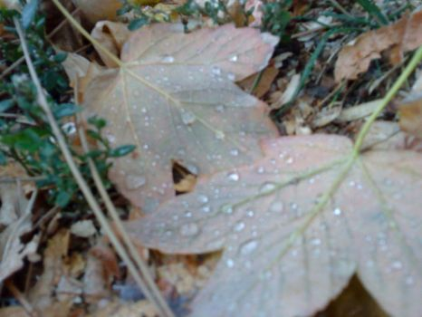 leaves during rain by f3hmii