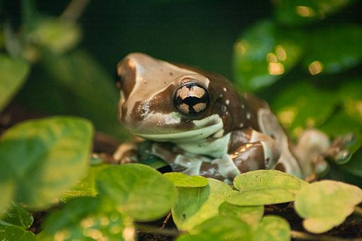 Frog behind glass by sebsn