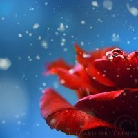winter passion by Orwald